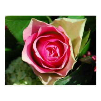 Rose Pedals Postcard