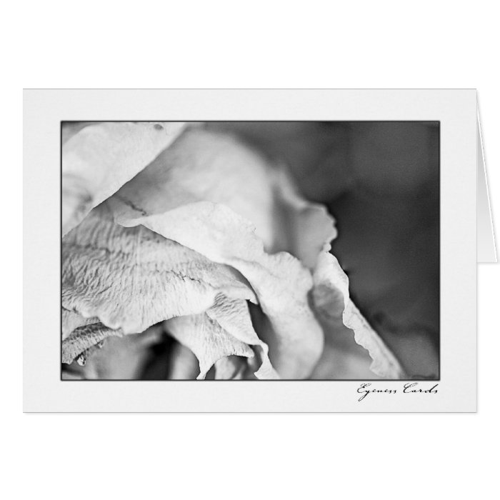 Rose Petals-Black and White Card