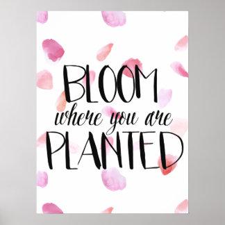 Rose Petals Bloom Poster