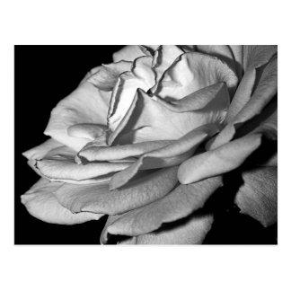 Rose Petals in Monochrome Postcard