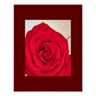 Rose Photo Poster