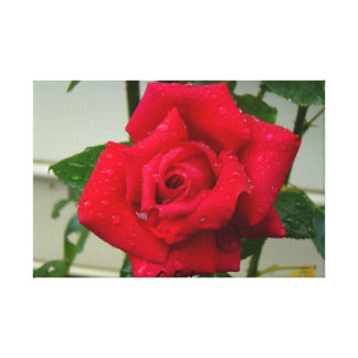 Rose Photo Stretched Canvas Prints