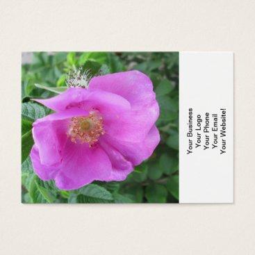Beach Themed Rose Pink Beach Plum Business Card