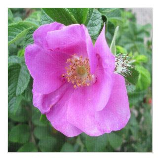 Rose Pink Beach Plum Card