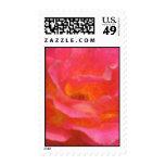 Rose Pink Blend Stamp