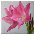 Rose Pink Crinum Ceramic Tile Home Decor