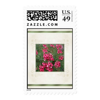 Rose Pink Diascia Flowers Stamps