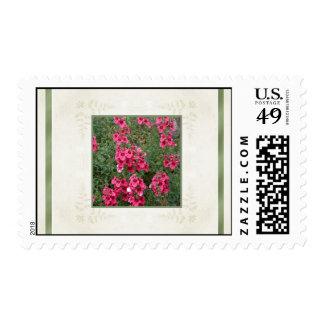 Rose Pink Diascia Flowers Postage Stamp
