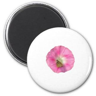 Rose Pink Morning Glory Magnet