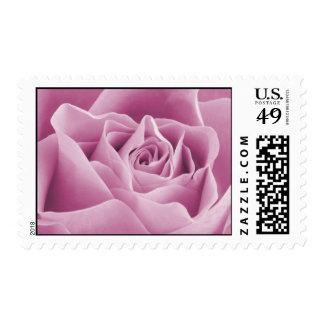 Rose Pink Rose Stamp