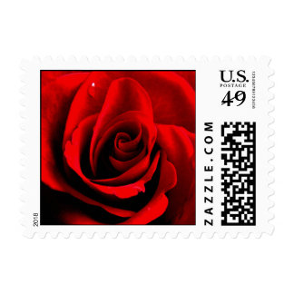 Rose Postage Stamp