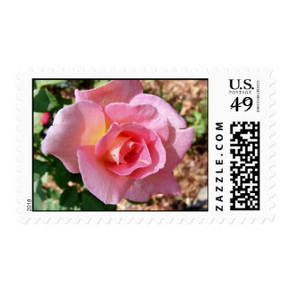 Rose Postage Stamps