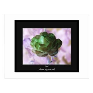"""Rose"" Postcard"
