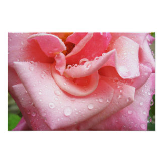 Rose Poster 001