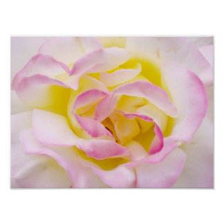 Rose Print