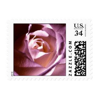 Rose Purple Mauve Stamp