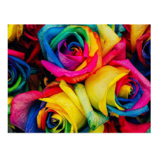 Rose Rainbow Postcard