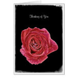 Rose Raindrops with Love Greeting Card