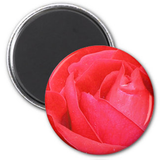 Rose - Red Magnet