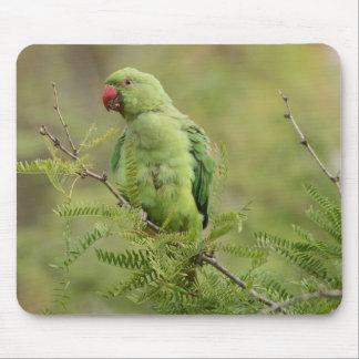 Rose-ringed Parakeet Mousepad