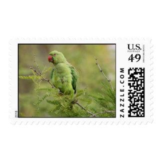Rose-ringed Parakeet Postage Stamps