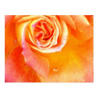 Rose rose postcard