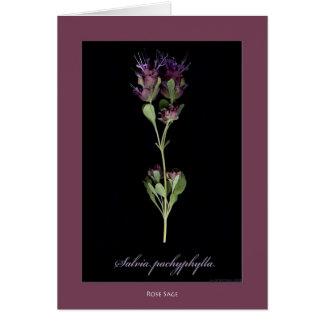 Rose Sage Botanical Print Cards