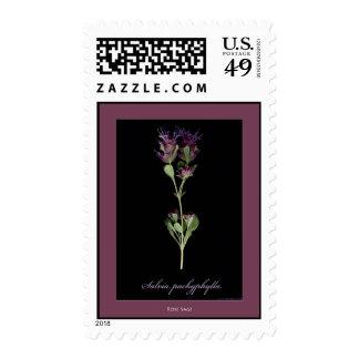 Rose Sage Postage
