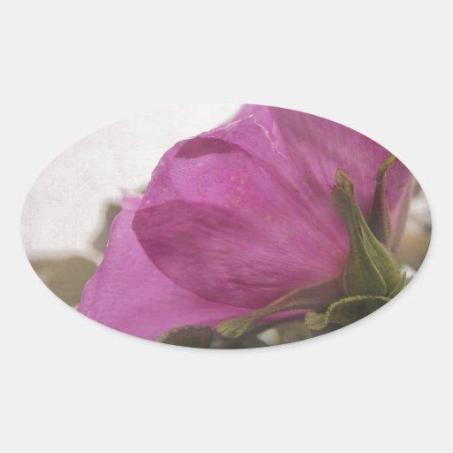 Rosé salvaje calcomania óval