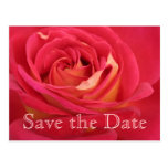 Rose Save the date 90th Birthday Celebration - Postcard