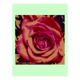 Rose Series Postcard