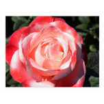 Rose Shades Post Cards
