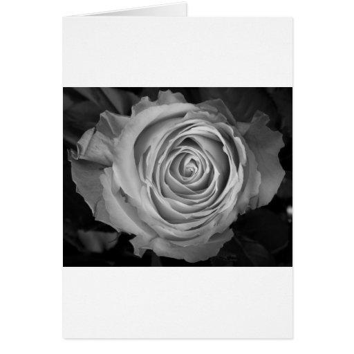 Rose Spiral BW Greeting Cards