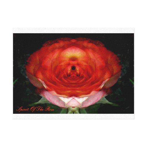 Rose-Spirit ... (Leinwand-Druck) Gespannter Galeriedruck
