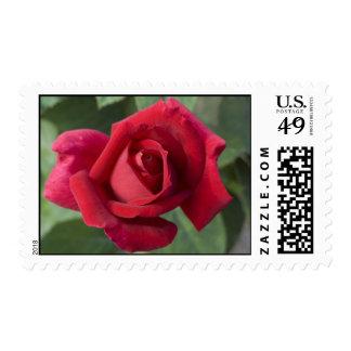 Rose Stamp #1