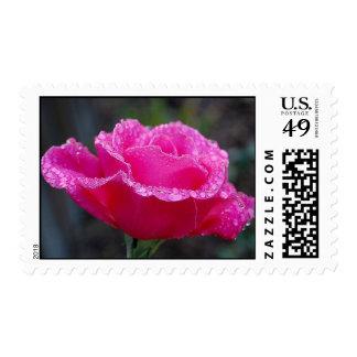 Rose Stamp #2
