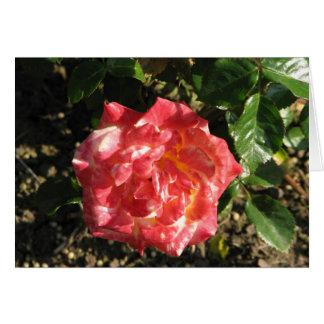 Rose Test Garden 043 Card