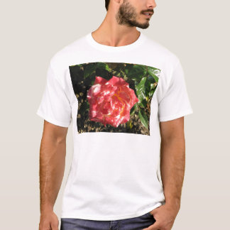 Rose Test Garden 043 T-Shirt