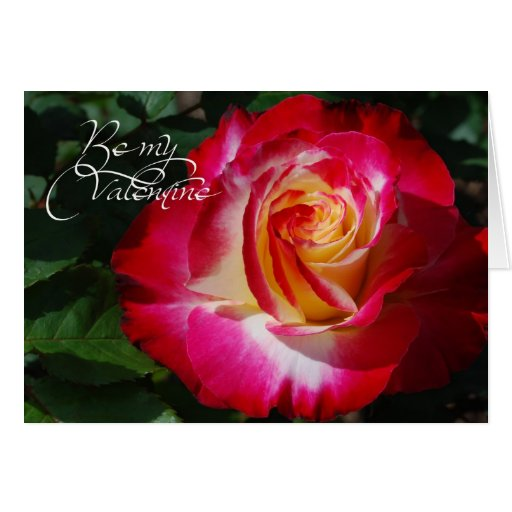 rose valentine greeting card