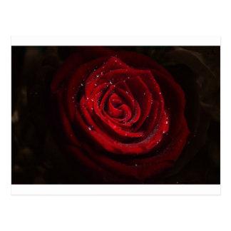 Rose Vines Heart Pattern Flower Peace Love Destiny Postcard