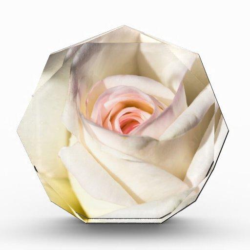 Rose White Award