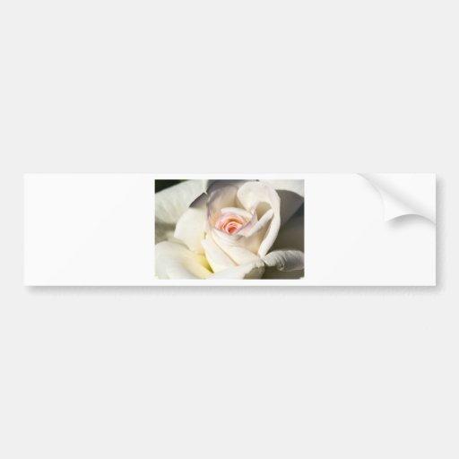 Rose White Bumper Stickers