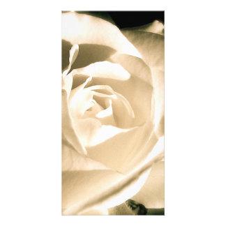 Rose White Card