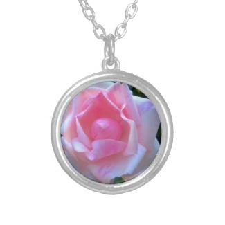 Rose White Pink