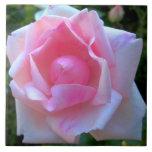 Rose White Pink Tile