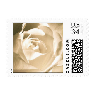 Rose White Stamp