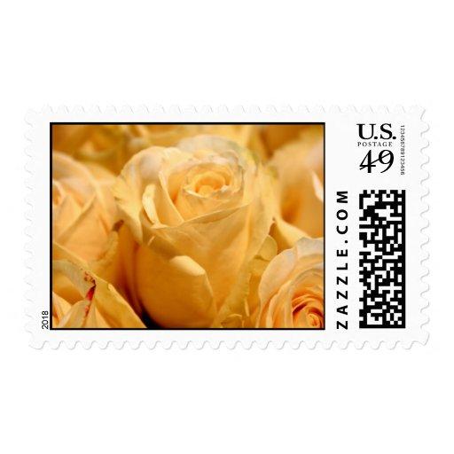 Rose White Wedding Postage Stamp