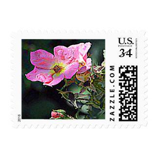 Rose wild (North Dakota) Postage Stamp