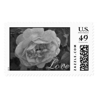 rose with bud black and white, Love postage stamp