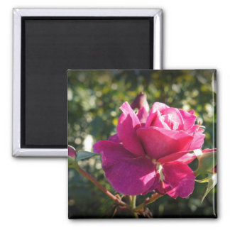 Rose with Buds Magnet